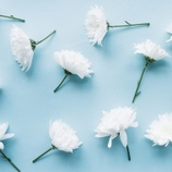 white-flowers-over-a-light-blue-background_23-2147699641